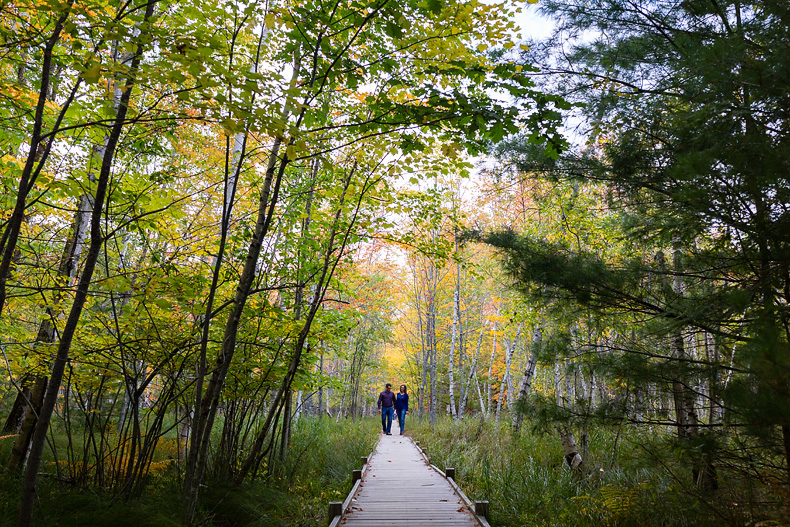 Engagement portraits on the Jesup Path in Acadia National Park